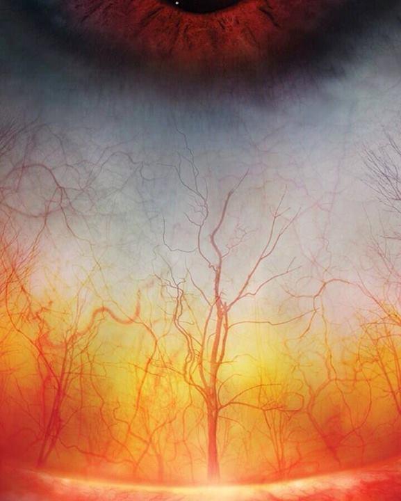 """""""Miškas"""" žmogaus akyje"""