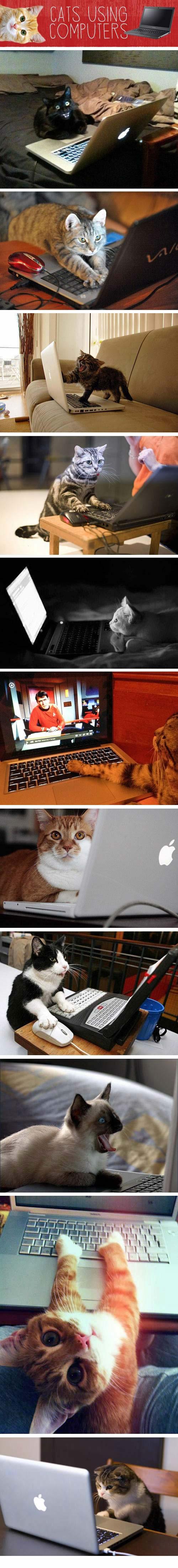 Katinai naudojasi kompiuteriais