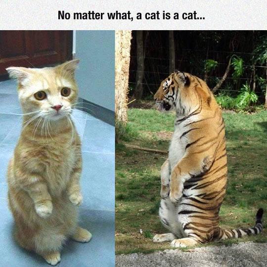 Katė yra katė